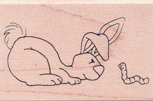 Bunny Stare Down