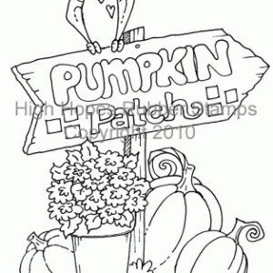 Laurie's Pumpkin Patch