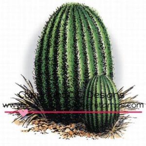 Barrel Cactus Cluster