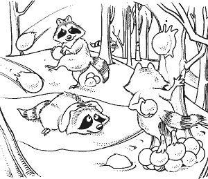 Raccoons Having a Snowball Fight