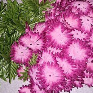 Margeriten pink