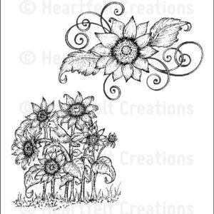 Sunflower Patch