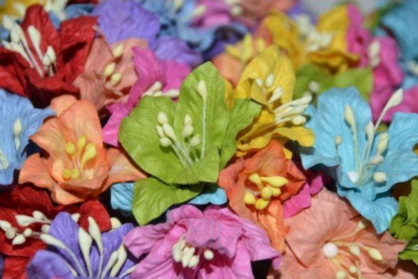 5 Lilies Colour Mix