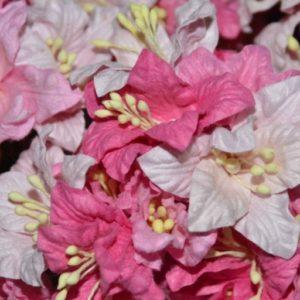 5 Lilies Pink Mix