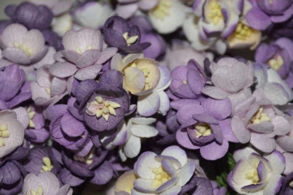 10 Cherry Blossoms Purple Mix