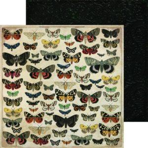 Anthology - Entomology