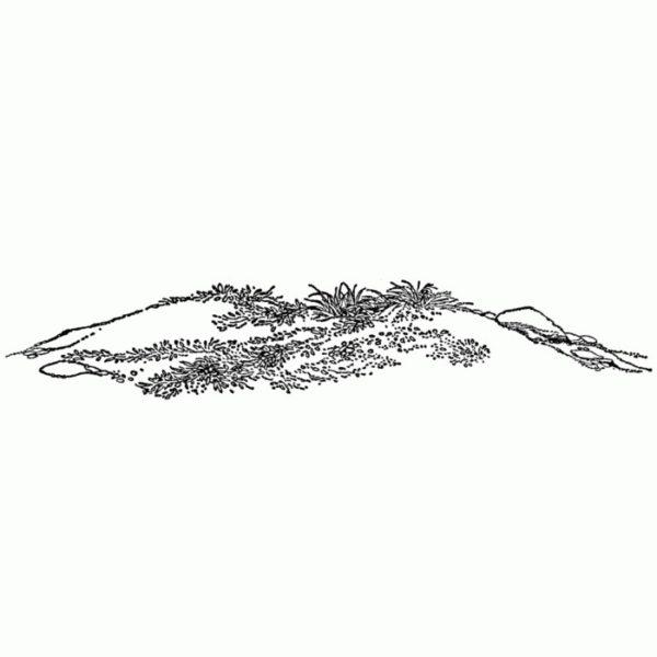 Grassy Mound