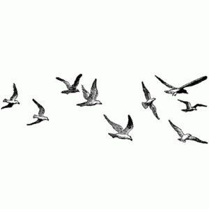 Large Seagulls