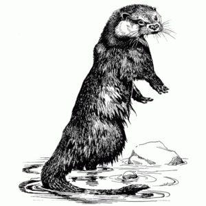 Otter Large