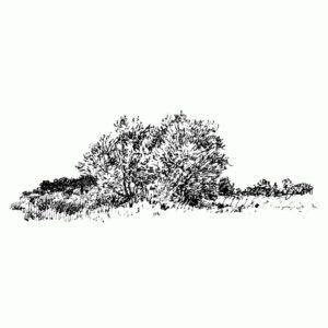 Far Trees