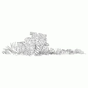 Fern in Grass