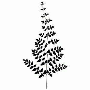 Lacy Fern Leaf