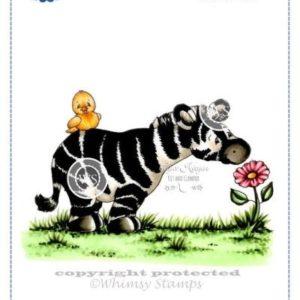 Spring Zebra