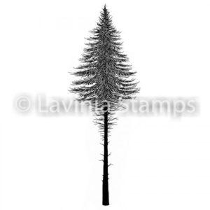 Fairy Fir Tree 2