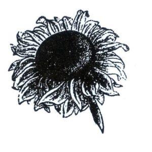 Sonnenblumenblüte mittel