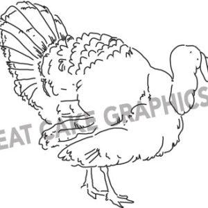 Pilgrim the Turkey