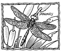 Dragonfly Frame