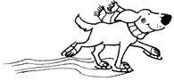Snowshoe Dog