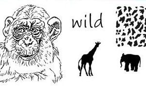 Wild Animals 1 - Set 2