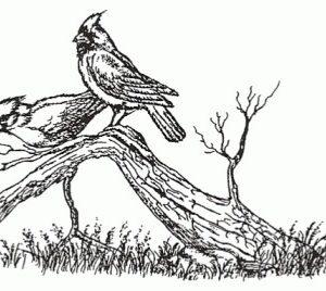 Perched Cardinals, Small