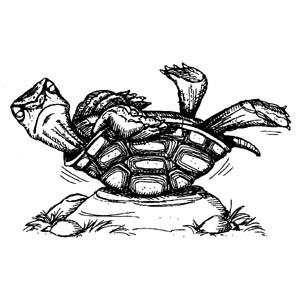 Turtle NEU
